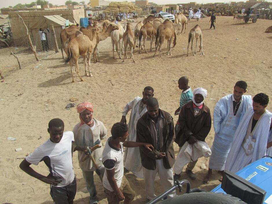 Ile kosztuje wielbłąd? Attention Dangel targują się na bazarze