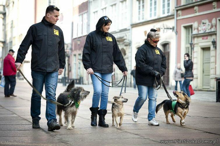 Czasami psy w poszukiwaniu własnego domu udają się z opiekunami w teren.