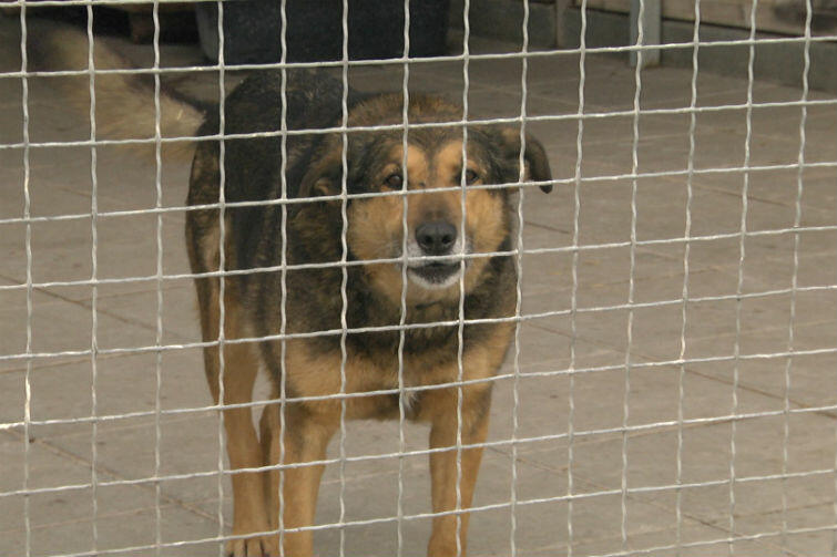Psy nie tylko się gubią, ale coraz częściej są kradzione