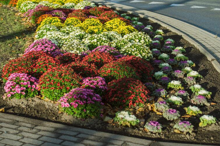 Jest bardzo kolorowo - dzięki posadzeniu chryzantem i barwnych dekoracyjnych kapust, które wytrzymują temperaturę nawet do minus 15 stopni Celsjusza. Efekt estetyczny ma przetrwać do wiosny