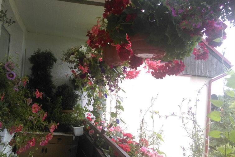 Drugie miejsce w konkursie na najładniejszy balkonowy ogródek w Gdańsku - dla Ryszarda Wasiołka z Matarni
