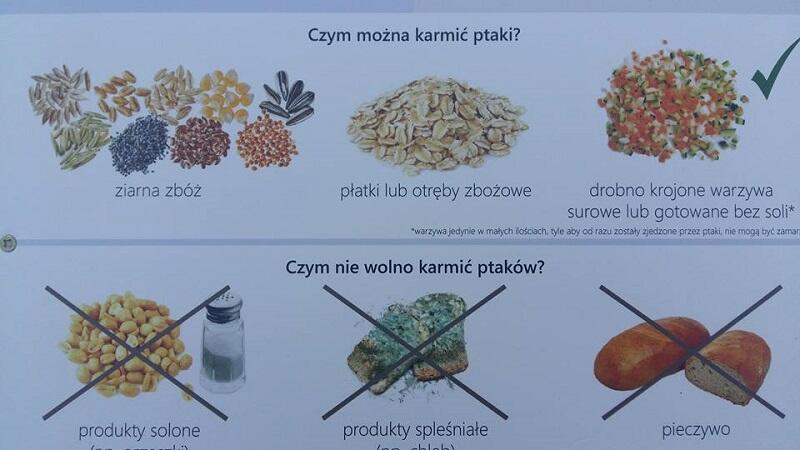 Krótka lekcja karmienia ptaków z gdańskiego kaczomatu