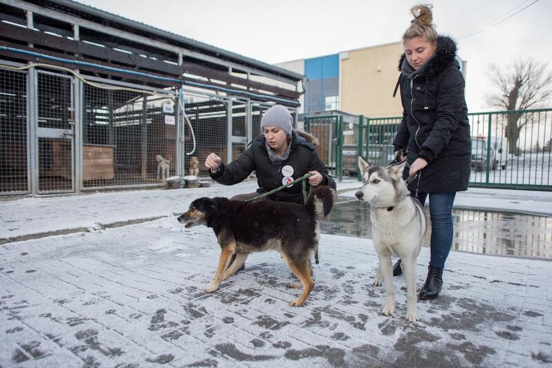 Schronisko dla bezdomnych zwierząt Promyk w Gdańsku Kokoszkach, wolontariuszki ze swoimi podopiecznymi