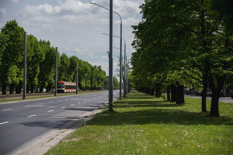 Wielka Aleja w Gdańsku - w maju najpiękniejsza