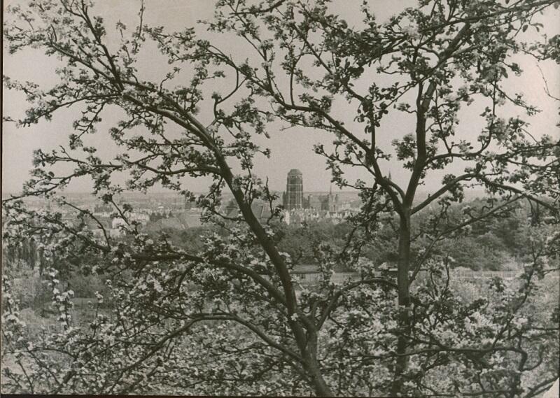 Gdańsk - jabłoniowy ażur