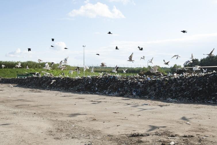 Nz. Plac dojrzewania kompostu w 2013 roku