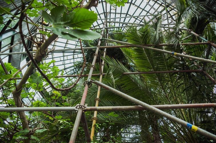 Na czas inwestycji przesadzono z palmiarni mniejsze rośliny. Obecnie zabezpieczana jest palma daktylowa