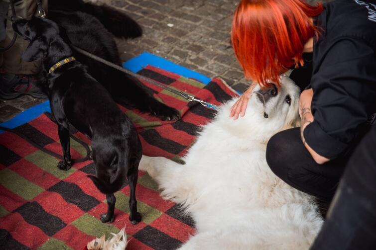 Wolontariuszka OTOZ Animals wyczuła u tego psa sporego guza. Jego właściciel tłumaczył, że to reakcja po wyjętym kleszczu