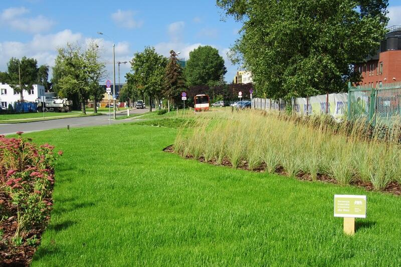300 mkw. trawnika i ponad trzy tysiące roślin zasadzono w pasie drogowym ul. Wałowej