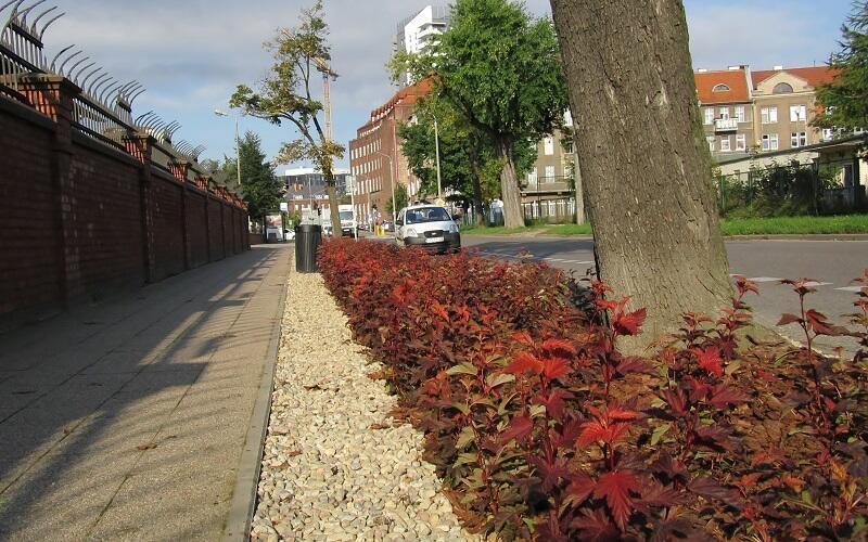 Zasadzono rośliny, które radzą sobie w miejskich warunkach i jednocześnie przyciągają owady