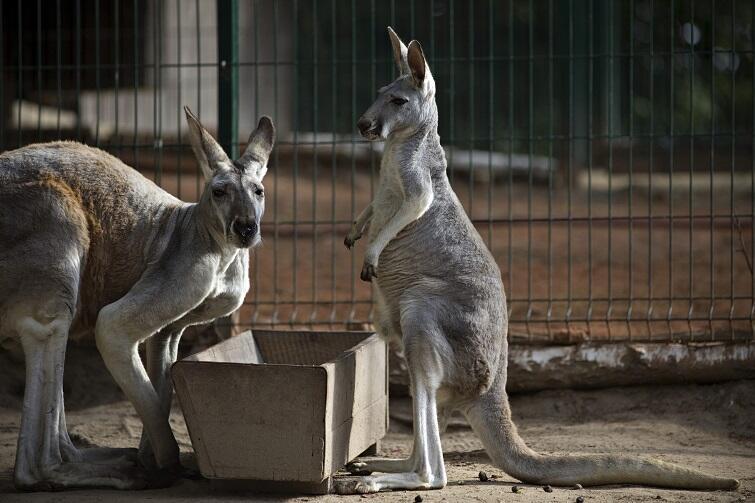 Nocne Poezje W Zoo Wiersze I Zwierzęta Czy Mają Ze Sobą