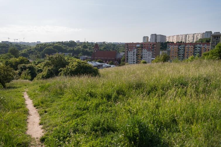 Park powstanie na terenie o powierzchni około 4 hektarów, pomiędzy ul. Szarą i Maryli
