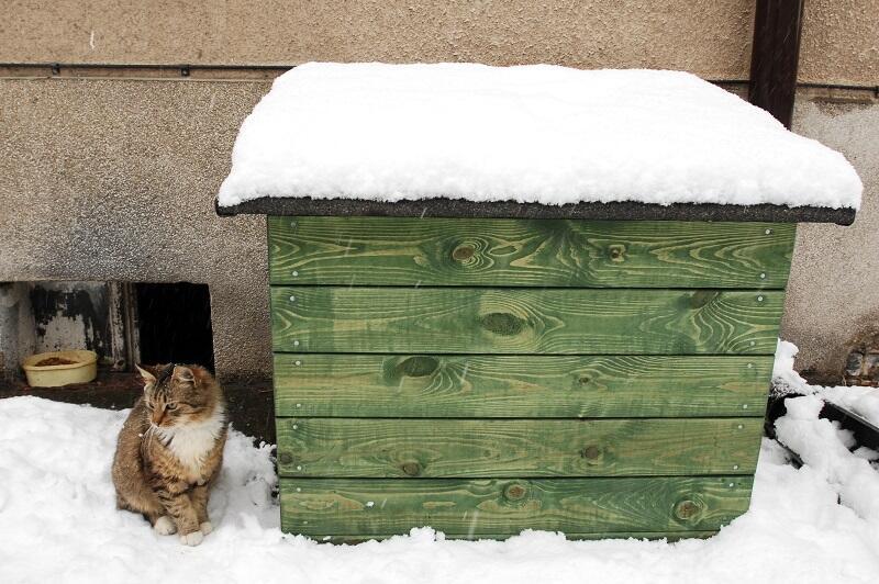 Koty w zimie potrzebują naszej pomocy