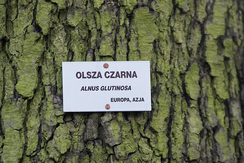 Takie tabliczki oznaczają wyjątkowo godne szacunku okazy drzew parkowych w naszym mieście