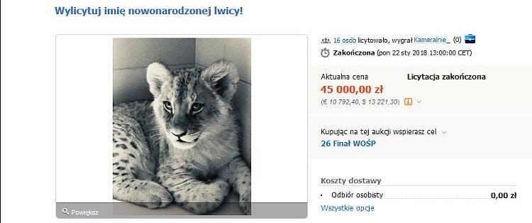 Licytacja imienia lwicy