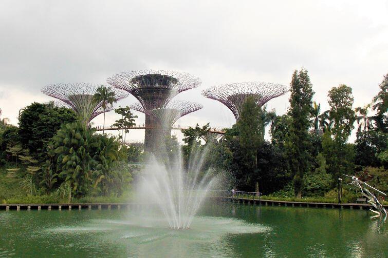 Stojące w Gardens by the Bay super-drzewa są porośnięte prawdziwą roślinnością, każdego wieczora odbywa się na nich pokaz świateł i muzyki