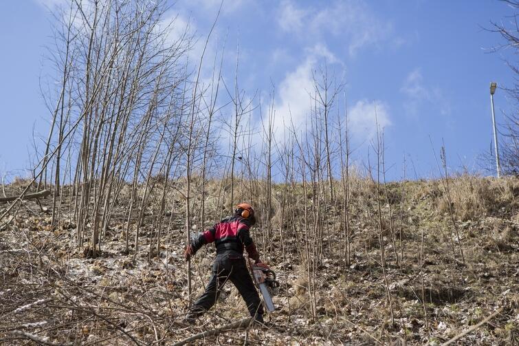 W ostatnim tygodniu marca rozpoczęła się wycinka drzew i krzewów po obu stronach Jaru Wilanowskiego, a także na skarpie przy ul. Wilanowskiej. Zarośnięte, i raczej omijane dotąd miejsca, zyskają na atrakcyjności. Pojawią się nowe place zabaw, ścieżki spacerowe, a także - najbardziej wyczekiwana przez okolicznych mieszkańców inwestycja - tunel pod ul. Wilanowską