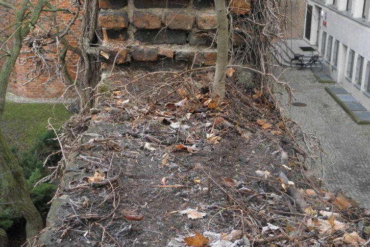 Te widoki to już przeszłość. Dzięki pracom z grudnia 2016 r. gdańskie mury warowne doczekały się konserwacji