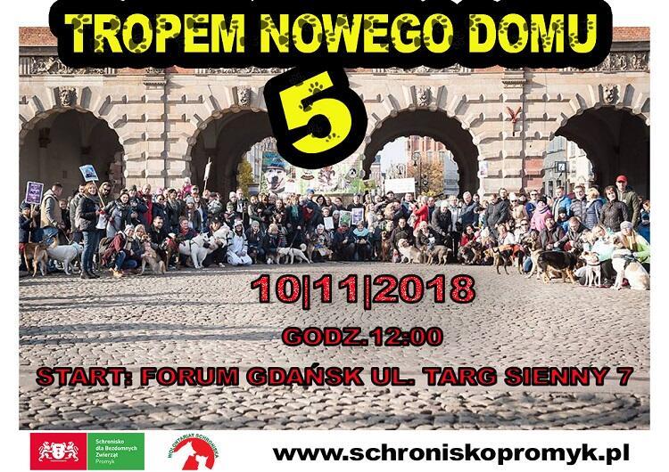 W tym roku już po raz piąty będzie można pospacerować po Głównym Mieście z psami ze Schroniska Promyk. Organizatorzy zapraszają też do udziału wszystkich chętnych ze swoimi czworonogami.
