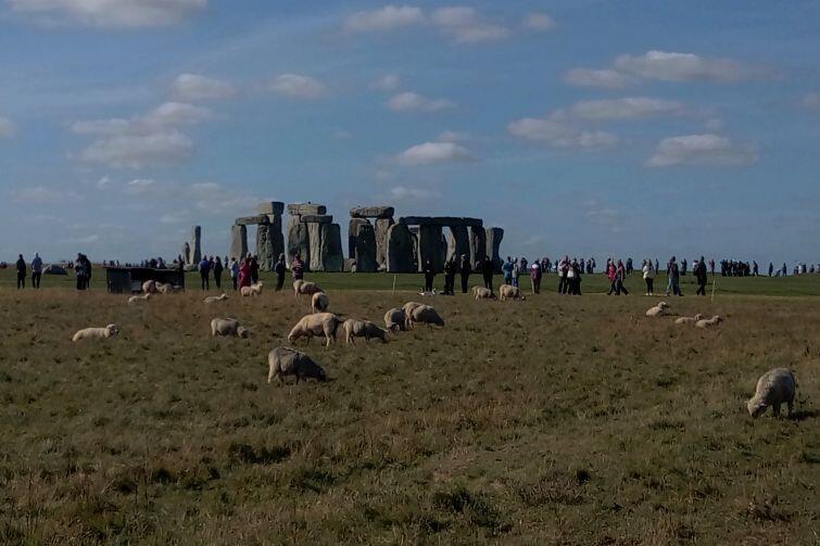 Stonehenge i owce
