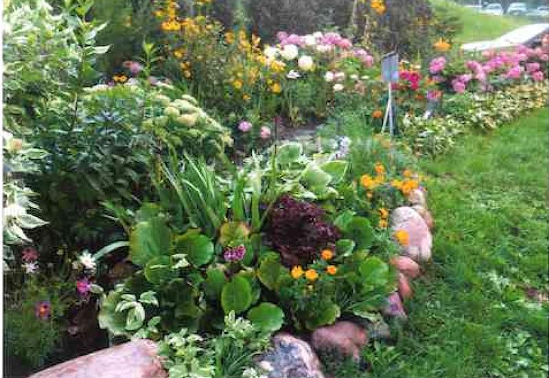 Efekt syzyfowej pracy.. Tylko dzięki ogromnemu zacięciu Elżbiety i jej męża ten ogródek tak pięknie wygląda. Nawet dzikom nie udało powstrzymać laureatki przed zdobyciem I miejsca
