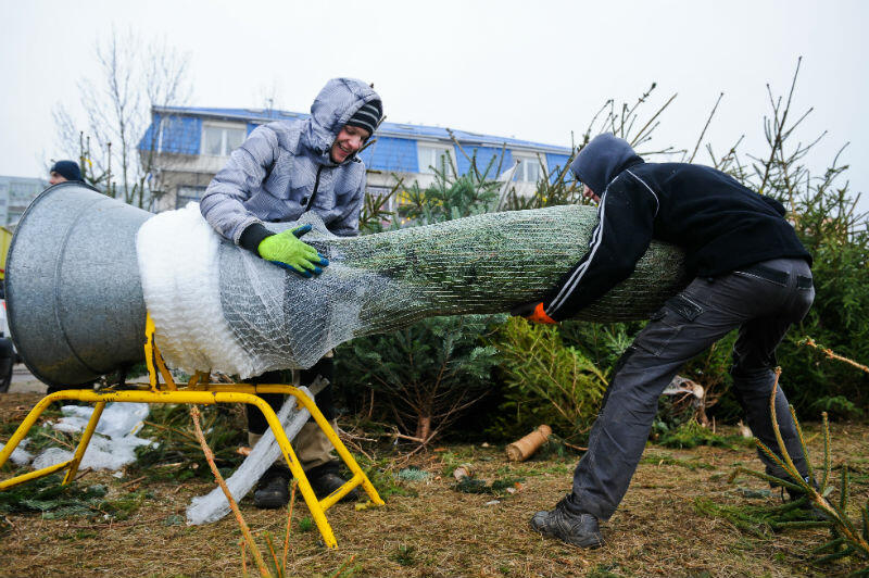 Drzewka na choinki sprzedawane są na terenach miejskich, spółdzielczych, prywatnych