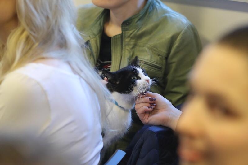 Nie wszystkie koty mają szczęście znaleźć dobre i wygodne życie wśród kochających ludzi. Wiele żyje na dworzu i to one potrzebują mądrej pomocy, szczególnie w okresie zimowym