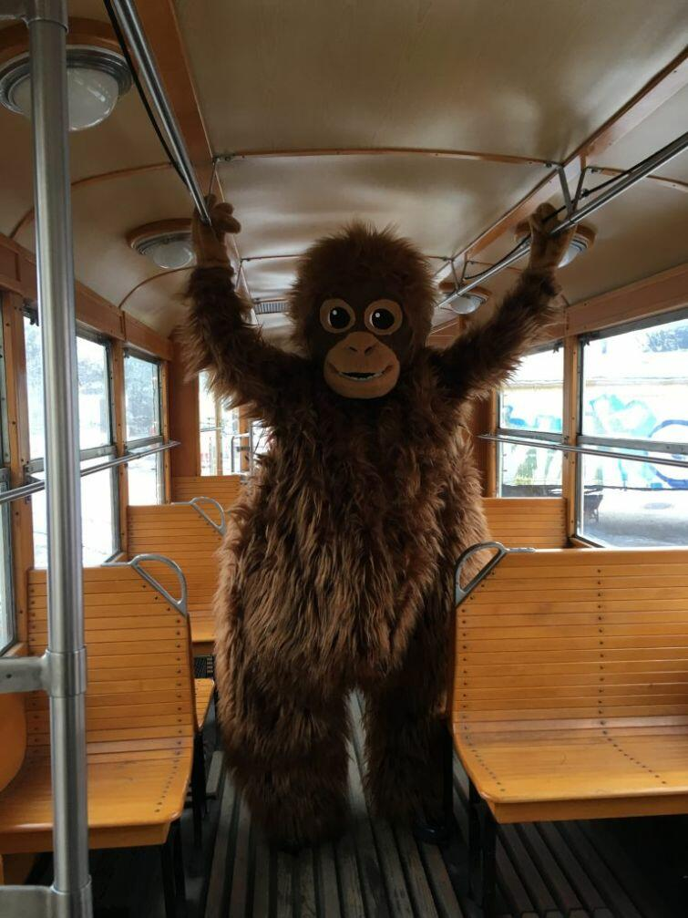 Maskotka orangutanicy Rai to nowa tegoroczna atrakcja