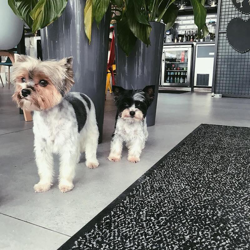 Nie wszystkie psiaki mają tyle szczęścia, co te dwa maluchy spacerujące po restauracyjnej podłodze... Pomożecie tym zwierzakom, które tego bardzo potrzebują?