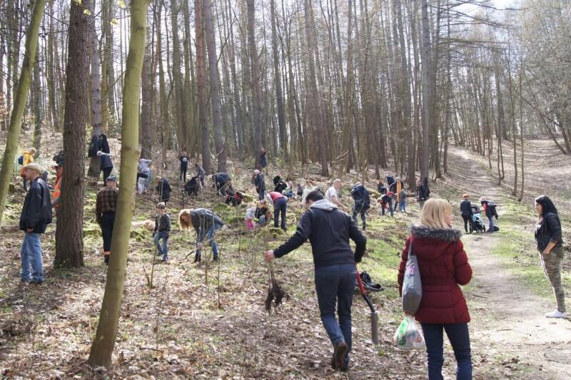 Akcja sadzenia drzew w miejskich terenach leśnych (pas nadmorski, w sąsiedztwie Paru Reagana)