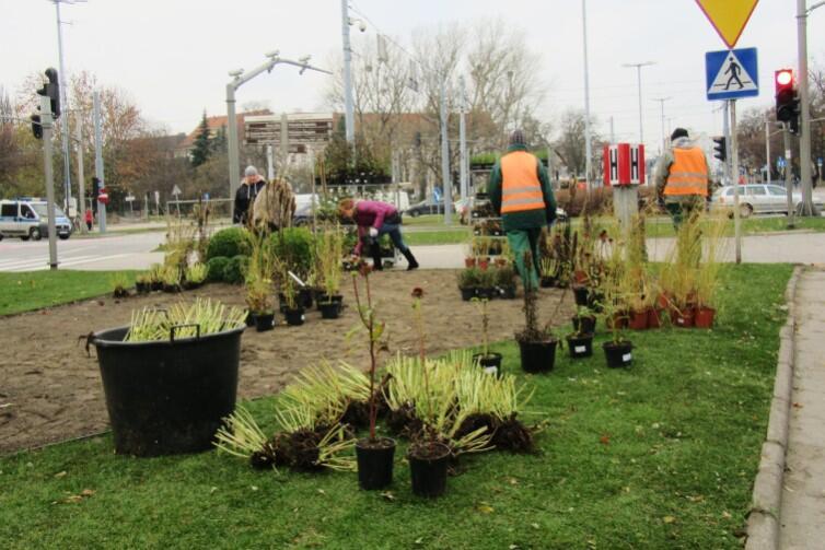 Prace ogrodnicze w Śródmieściu, przy Hucisku - widok od strony pomnika Jana III Sobieskiego