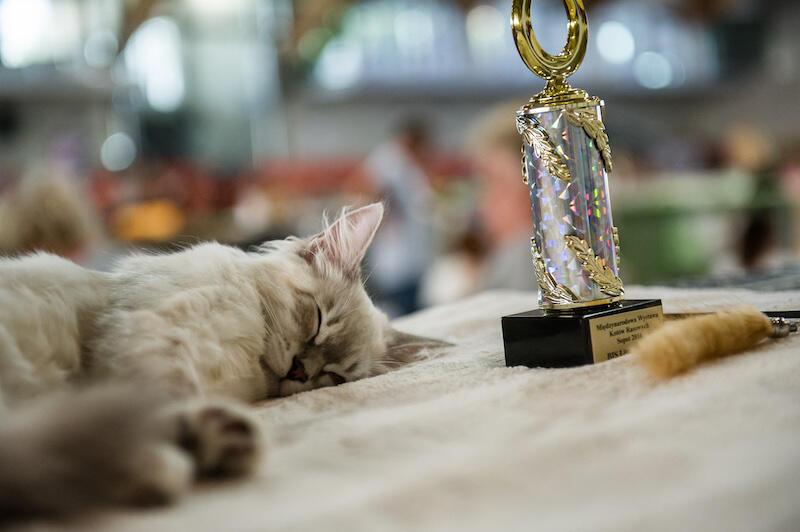 Zdobywanie nagród to nie tylko trudne zadanie, ale też bardzo męczące