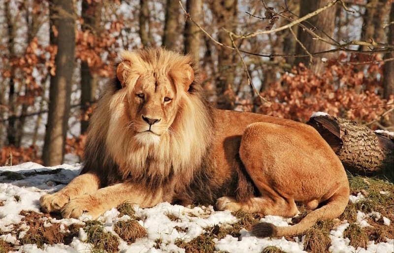 Nie da się ukryć, że Lolek zmężniał. Teraz wygląda jak prawdziwy król lew