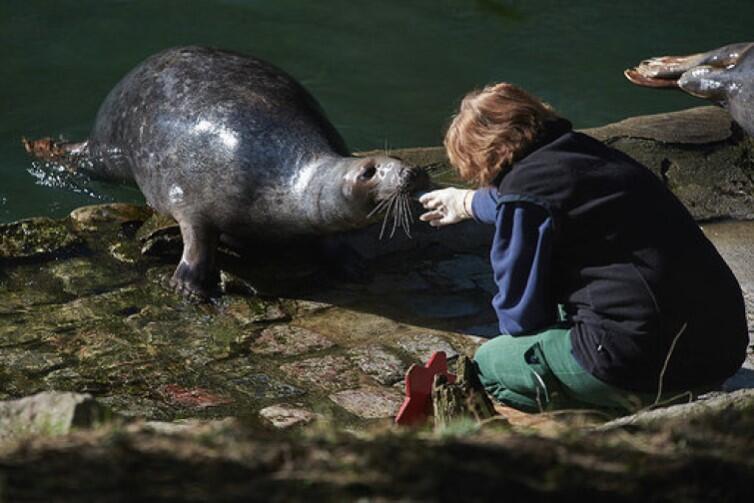 Foczka - trudno ich nie kochać, szczególnie tych z oliwskiego zoo