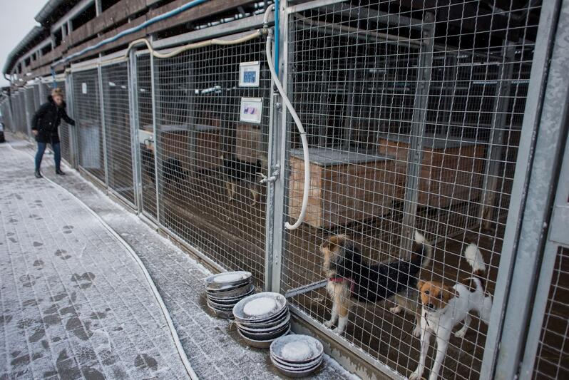 Schronisko dla bezdomnych zwierząt PROMYK w Gdańsku