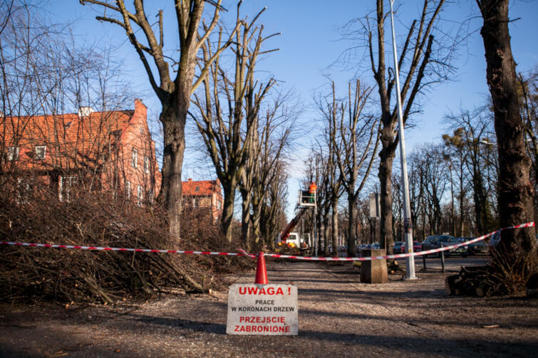 Wycinka obumarłych drzew to konieczność, ze względu na niebezpieczeństwo spadających konarów