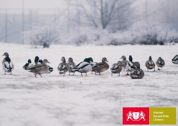 Ptaków nie należy karmić chlebem, ponieważ wywołuje u nich choroby układu pokarmowego. Może nawet skończyć się ich śmiercią. Gnijące w wodzie pieczywo jest również szkodliwe dla środowiska