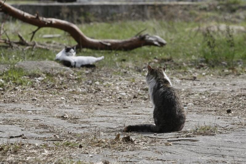 Wśród już zgłoszonych projektów do BO wiele z nich dotyczy opieki nad wolnobytującymi kotami