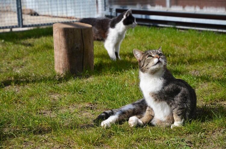 Akcja Koty na wypadzie  odbędzie się już po raz piąty.