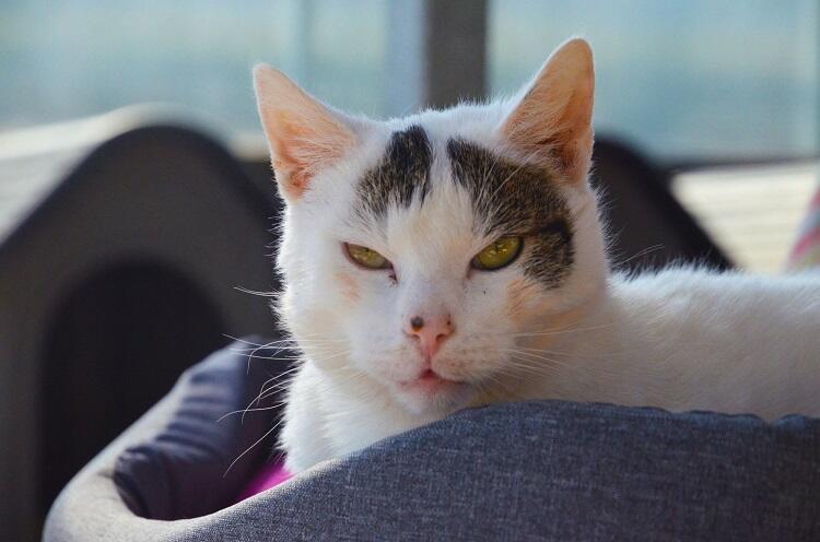 W sobotę będzie można poznać kilka kotów, jakie obecnie przebywają w schronisku.