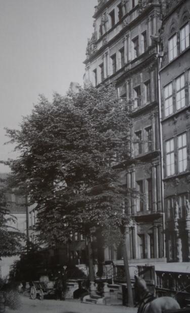 Lipa przed Domem Angielskim na Chlebnickiej dziś jest ta sama, co na dawnych zdjęciach; około 1905