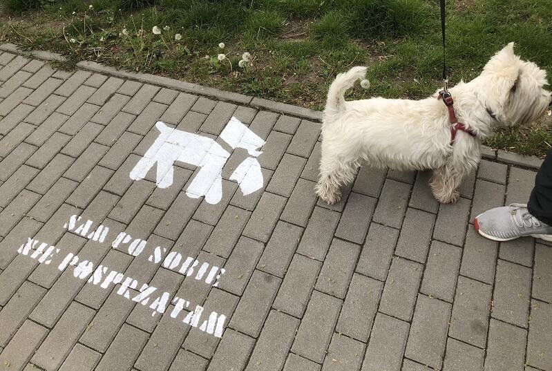 Ul. Suchanka na Chełmie - chodnikowa kampanią Spółdzielni Mieszkaniowej Chełm skierowana do właścicieli psów