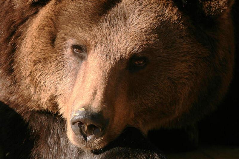 IMG_6256 niedźwiedź.JPG