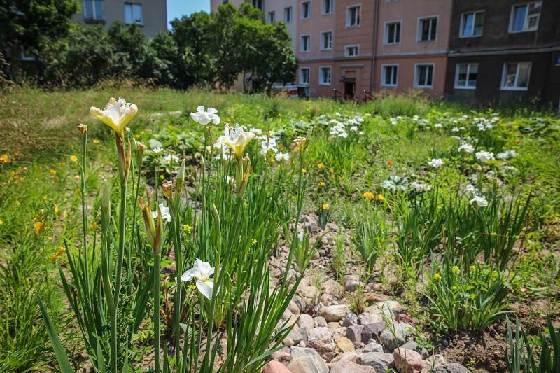 Od października 2018 r. ogród deszczowy przy ul. Zakopiańskiej pięknie się rozwinął i działa!