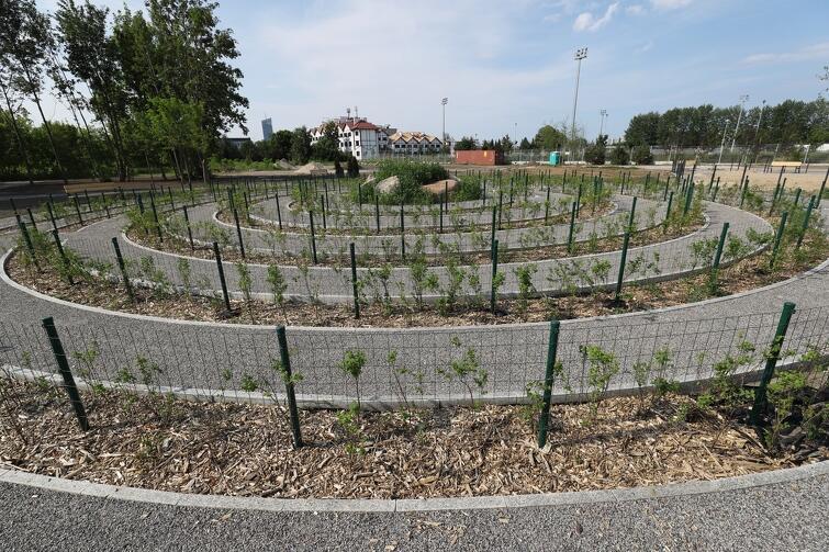 Na Strzyży powstaje m.in. labirynt, wokół którego nasadzono krzewy i zamontowano ławki