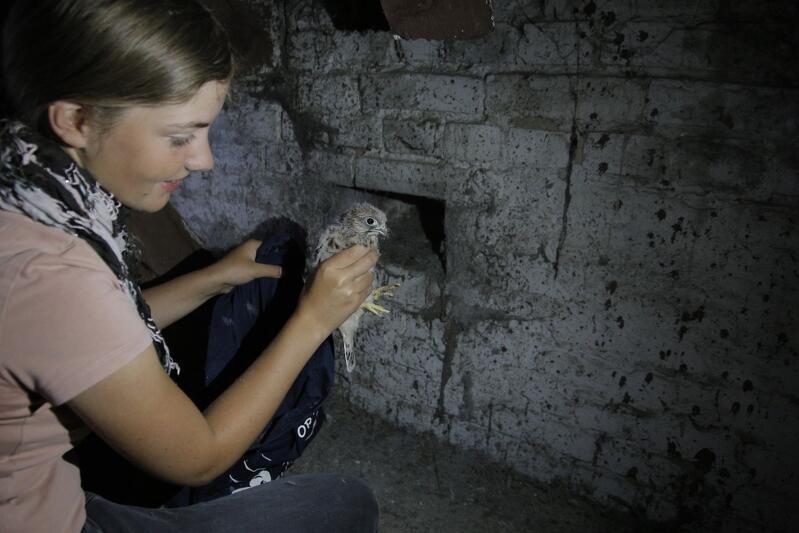 ...a Helena Trzeciak w tym samym czasie wyjęła ptaki z gniazda od strony strychu VIII LO