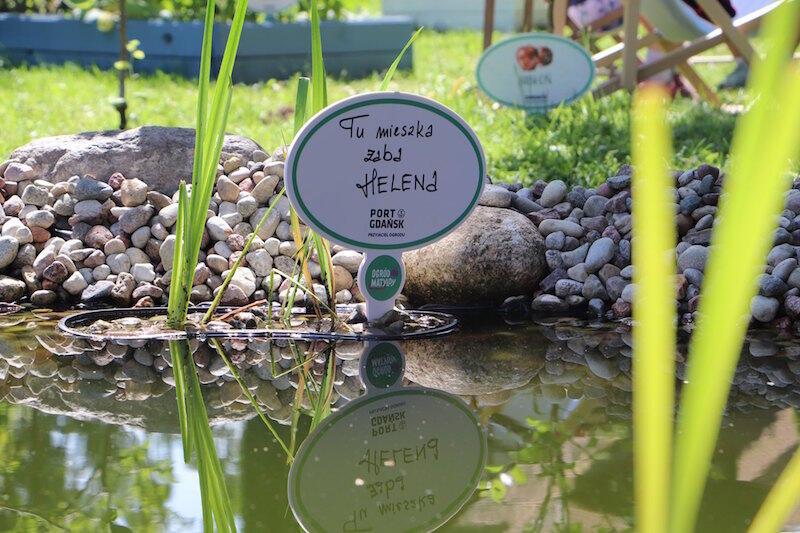 Żaba Helena i bąk Stefan to pierwsi mieszkańcy Ogrodu Matyldy, ale kto wie, z czasem może liczba mieszkańców tego miejsca się powiększy