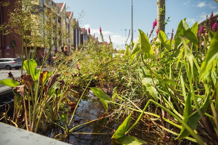 Instalację przedstawiającą przykładowy ogród deszczowy przygotowali pracownicy miejskiej spółki Gdańskie Wody