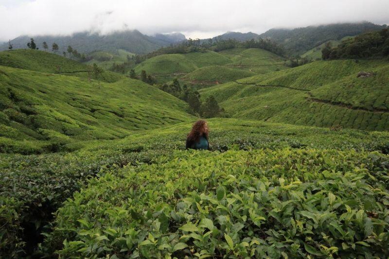 Plantacja herbaty w Munnar, jedno z moich ulubionych miejsc pośród tych odwiedzonych podczas weekendowych wycieczek