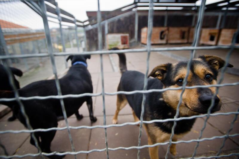 Schroniskowy boks to w Promyku codzienność 130 psów. Nawet kilkuminutowy spacer to dla nich powód do ogromnego szczęścia...